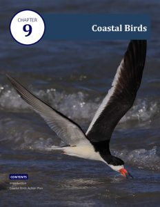 thumbnail of 6 Coastal Bend Bays Plan 2nd Ed – Coastal Birds