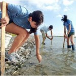 Nueces Marsh Restoration planting